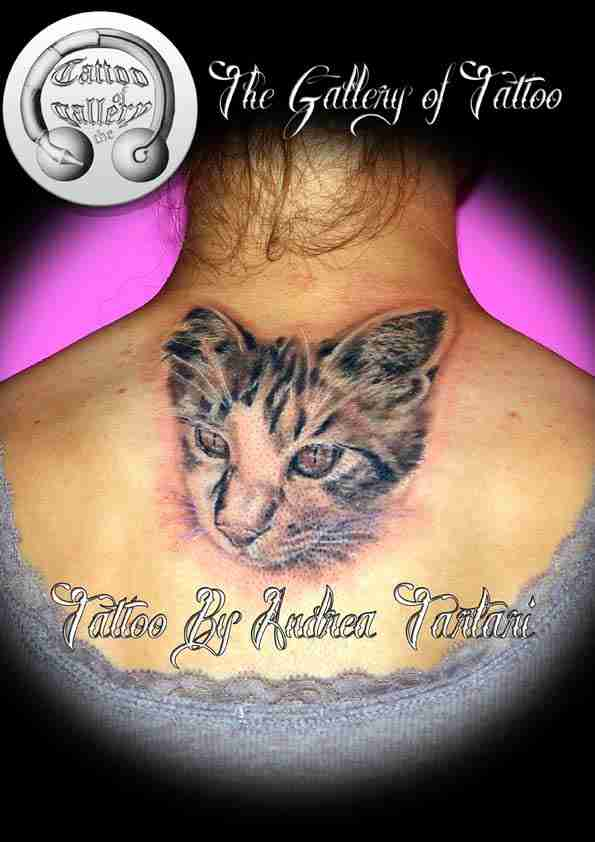 gattino-romeo