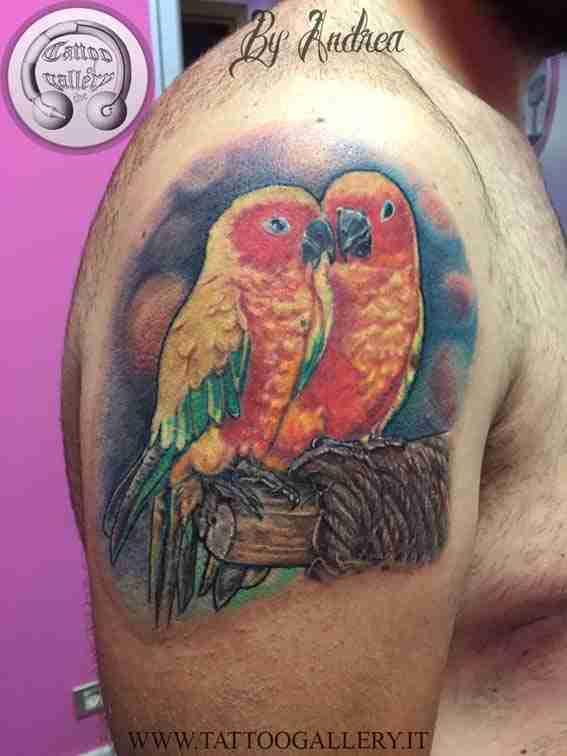 pappagalli-inseparabili