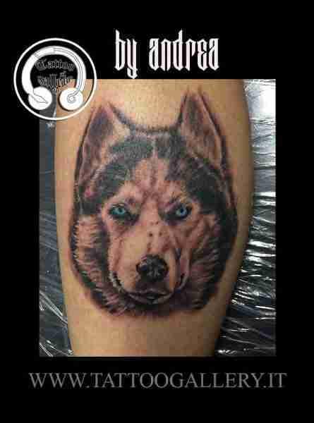 """alt=""""tattoo animali realistici husky """""""