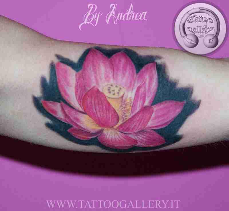 loto-rosa