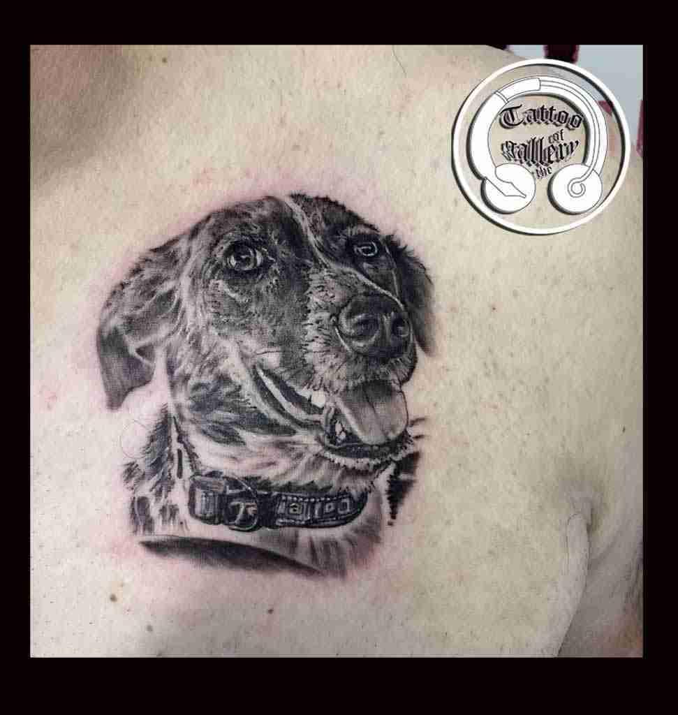 Ritratto cagnolina
